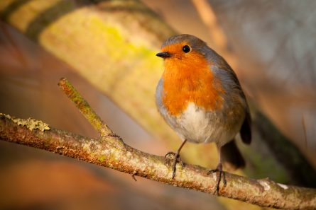 BEWARE THE BIRDS: DEVELOPERS AT RISK OF DELAYS UNLESS BREEDING BIRD SEASON MEASURES ARE TAKEN