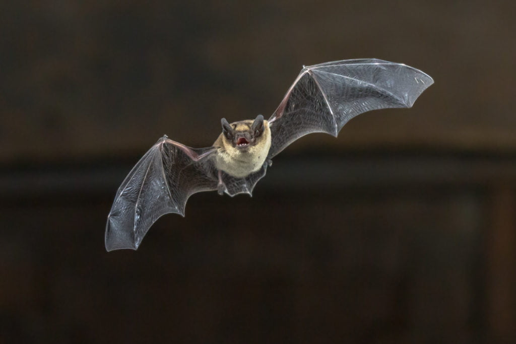 BATS AND BUILDINGS – SURVEY SEASON IS DRAWING TO A CLOSE