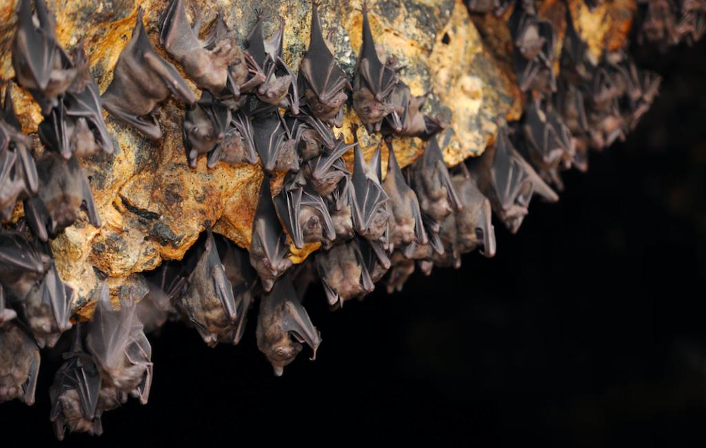 10 Bat Facts